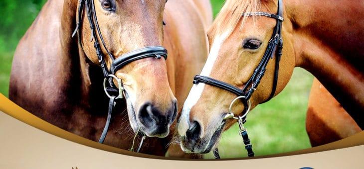 PARTENARIAT – Horse Store Privé renouvelle sa confiance à l'association La Reserve !