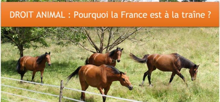 CODE ANIMAL : La Belgique très en avance par rapport à la France !