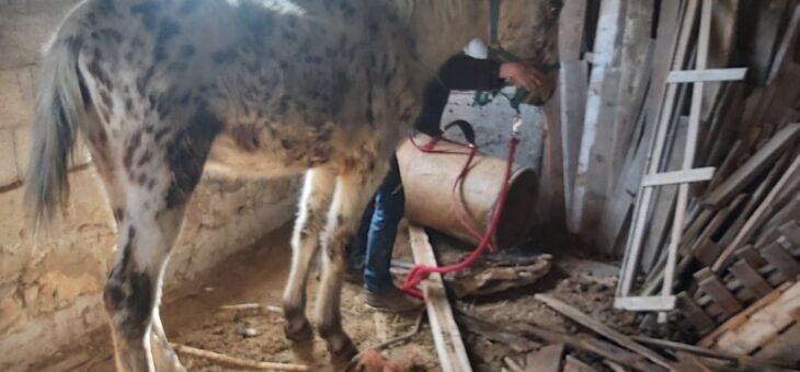 L'association saisie un poulain de 2 ans enfermé !